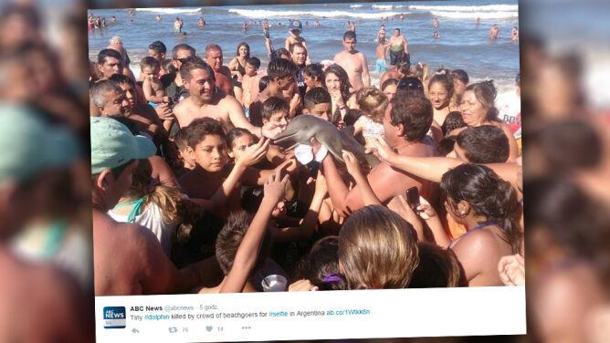 Wyciągnęli delfina na plażę, żeby zrobić selfie. Zwierzę nie przeżyło